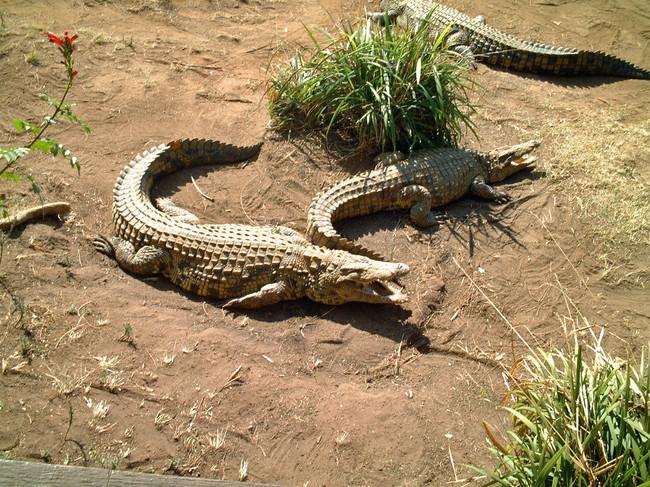PheZulu Crocodile and Snake Farm, Durban
