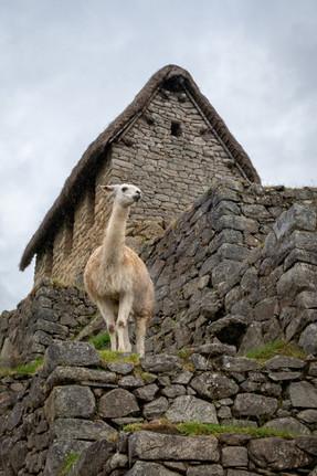 Llama and Guardhouse