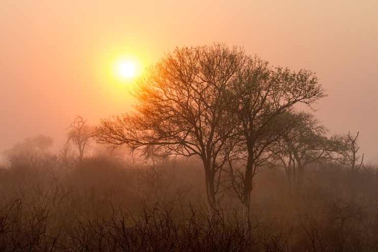 Stillness in the African Bush