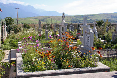 Wildflowers growing on a grave