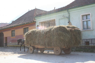 Farmer returning from the harvest2.jpg