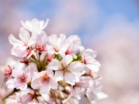 Happy Spring from Ria Waugh Photography