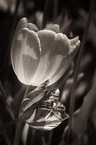 The Luminosity of Spring