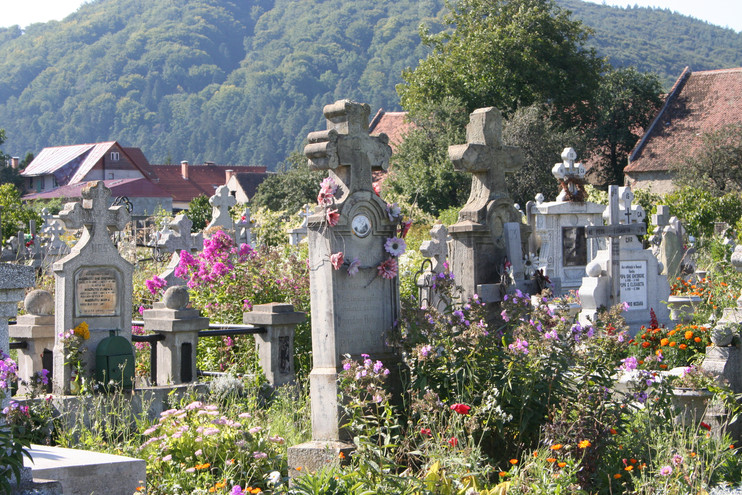 Cemetery overgrown with wildflowers