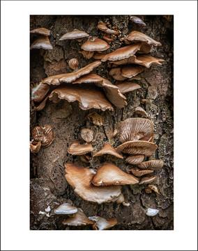 The Mushroom Stump $15