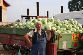 Cabbage Vendor