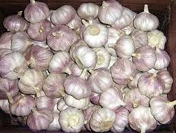 Northern White Garlic.jpg