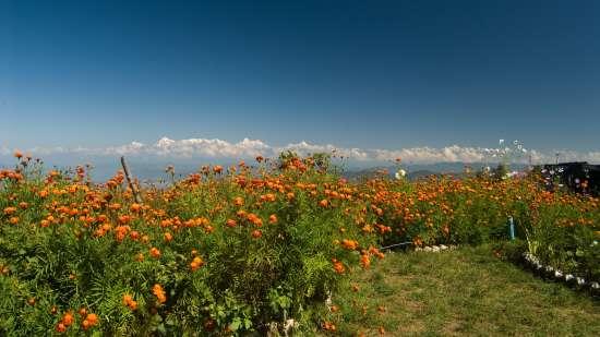 Himalayas Nainital Campsite Mukteshar
