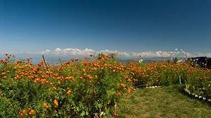 Himalayan View Camping Nainital.webp