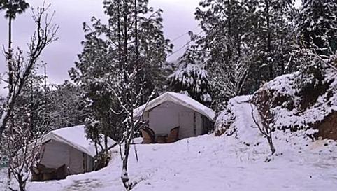 Mukteshwar Camping Near Nainital.webp