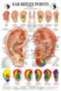 Auricle Chart.jpg