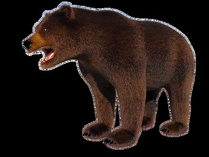 Brown Bear URSUS ARCTOS zoo world vr