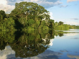 north amazon rainforest