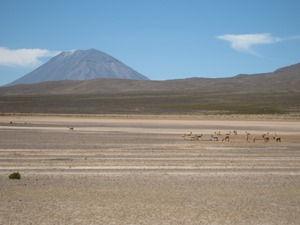 reserve de vigognes