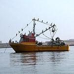 harina y aceite de pescado