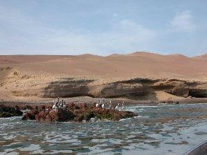 oiseaux sur les iles de paracas