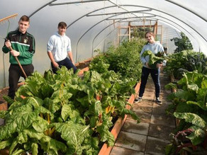 'We couldn't stop the lettuce growing': Donegal pupils work the school plot