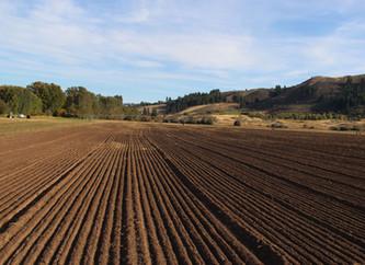 A Visit to Bluebird Grain Farms