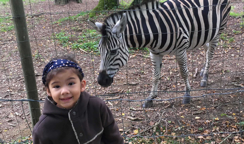 sweetie.L et le zebre