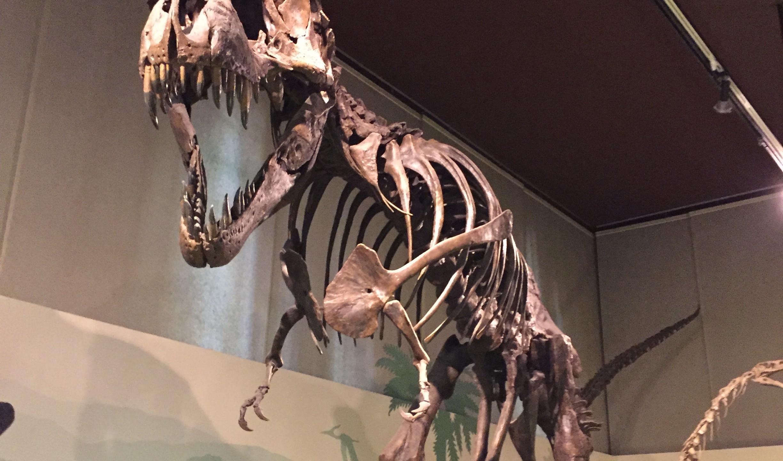 T-Rex musée histoire naturelle Milan