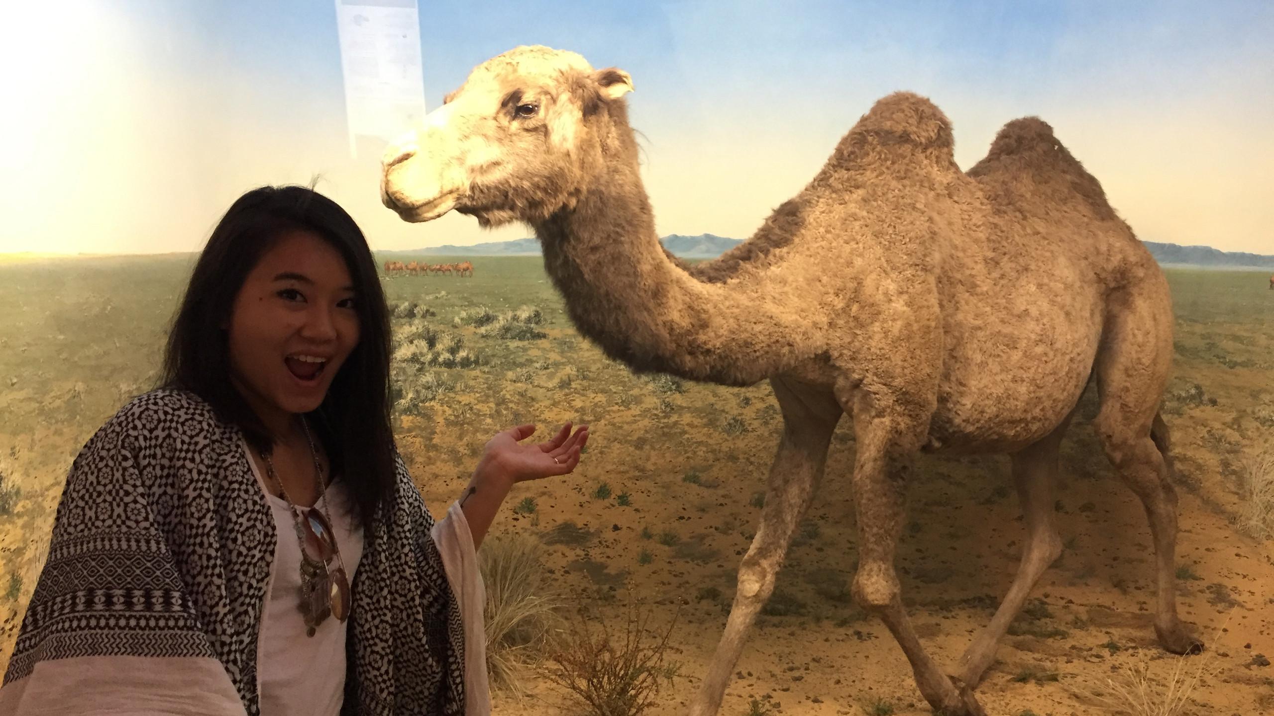Selfie avec un chameau?