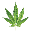 cannabisleaf2.png