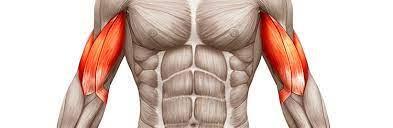 Treino Completo de Bíceps