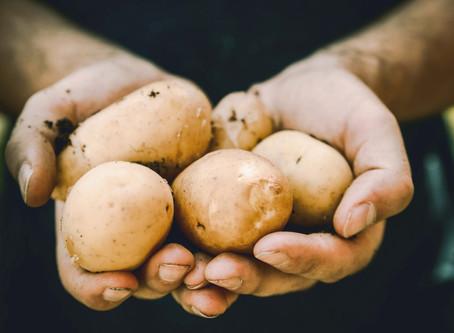 Välj ekologisk och KRAV-märkt potatis!