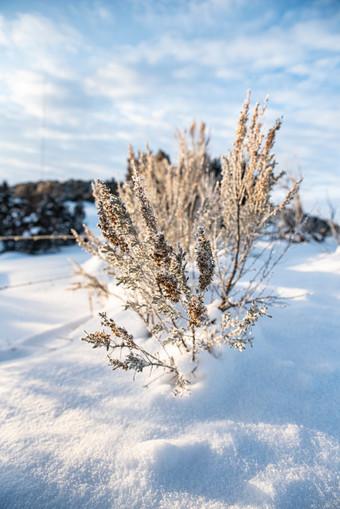 Winter Flowers.jpg