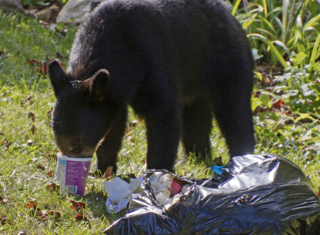 Eating healthy is good for bears too!