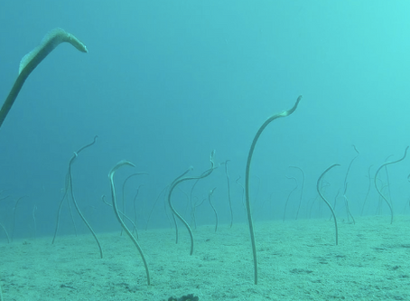 A garden of eels