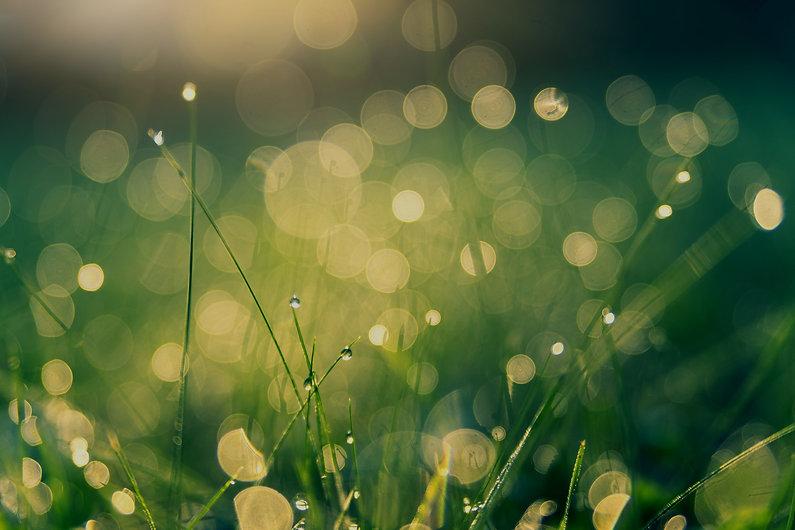 green-grass-with-bokeh-lights-2957860_ed