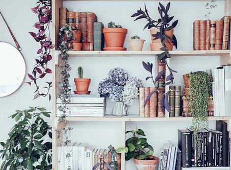 5 dicas de como usar plantas na decoração de móveis