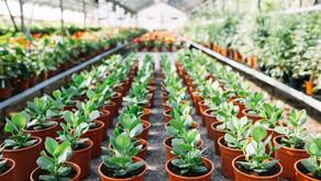 Plantas em Goiânia: encontre a melhor opção de loja na cidade