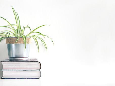 Guia de Cuidados com Plantas-Aranha. Como cultivar e dicas.