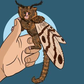 Moth Monkey