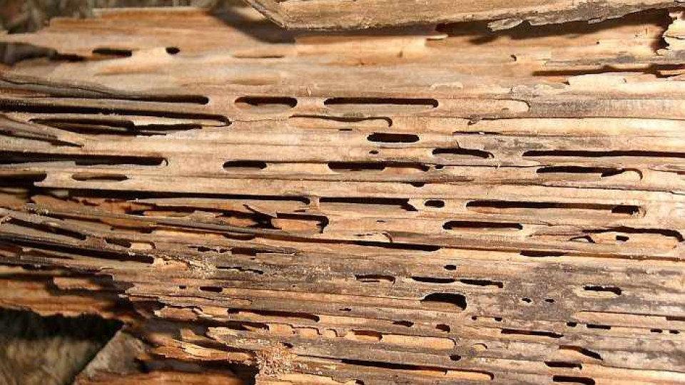 termite-damage.jpg