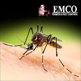 Mosquito jpg.