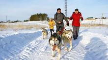 Хаски-тур или как провести выходные в Нижнем Новгороде
