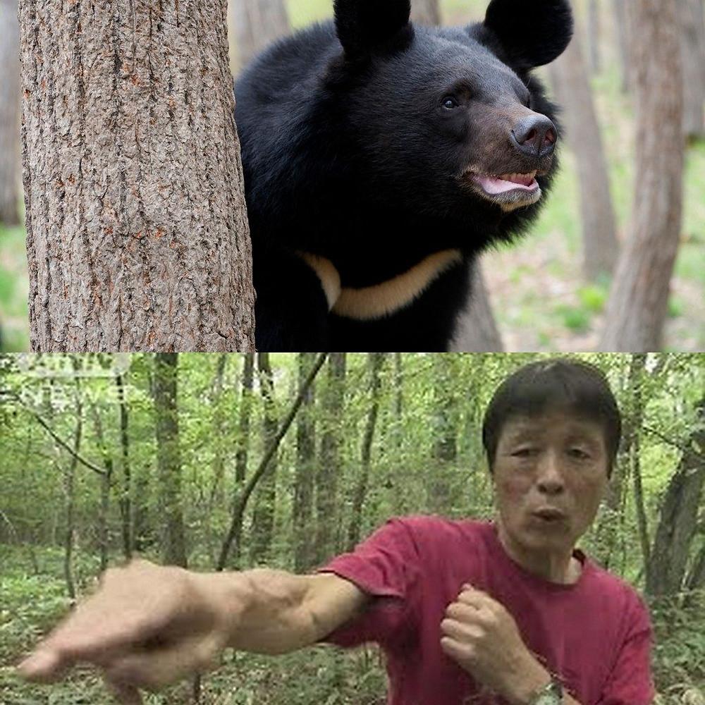 Японец устроил карате бой с диким медведем. Новости