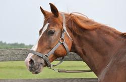 Катание на лошадях в Нижнем. тур