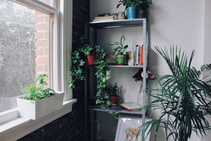 My Urban Jungle, with easy plants.