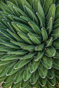 Succulent (4)