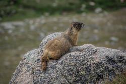 Marmot 2-2