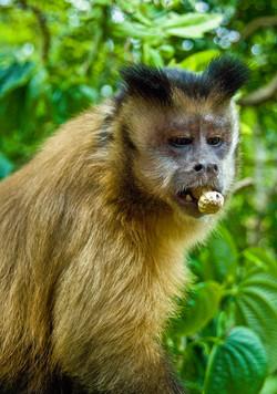 Macaque 4-2