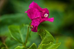 Lady Bug (3)