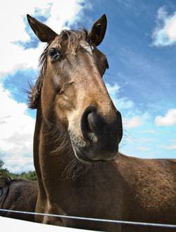 Horse 2-2