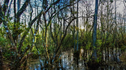 Everglades (10)-2