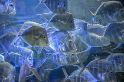 School of Fish (2)