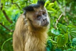 Macaque 3-2